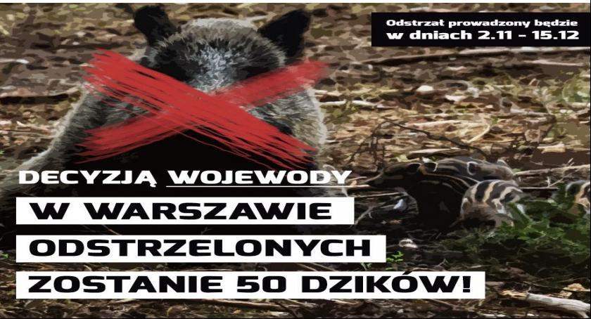 Zwierzęta, Odstrzał dzików Wilanowie Sprawdź gdzie - zdjęcie, fotografia