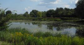 Jezioro Powsinkowskie. Perła wilanowskiej przyrody
